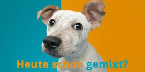 media/image/Mixenwasschmeckt-Hunde.jpg