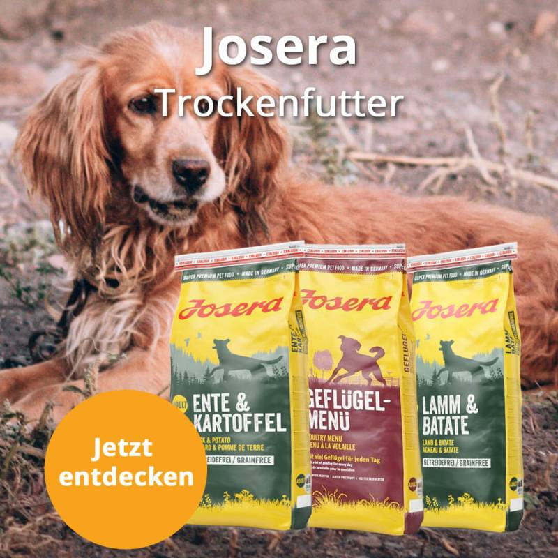 https://www.leckerchen24.de/JoseraMonatsaktion